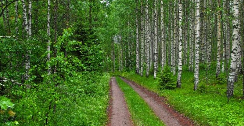 finland-forest.jpg