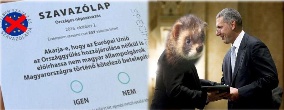 bayer-lazar-szavazolap.JPG