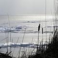 A jég hátán