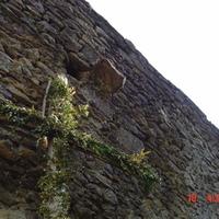 Pálos kolostor: Salföld