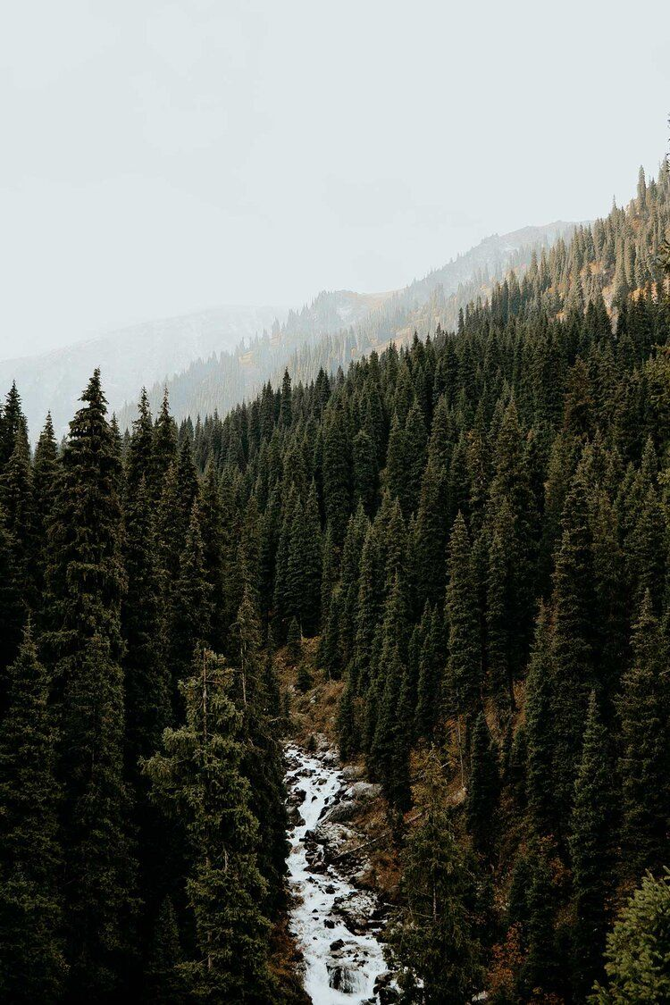 a_complete_guide_to_the_terra_forest_meadow_trail_in_the_almaty_mountains_where_the_souls_wander.jpeg