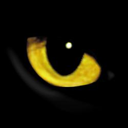 szemek1.jpg