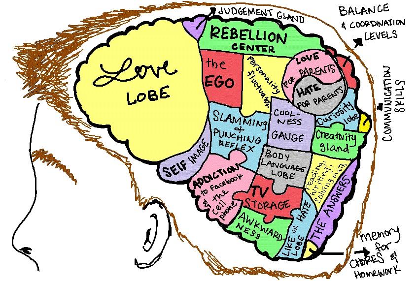 teen-brain-jpg.jpg