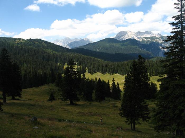 Velika Planina - Fenyves mindenfelé