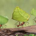 Védekezés a hangyák ellen