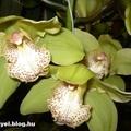 Az orchidea mégsem töltött káposzta