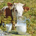 Kis tejhatározó