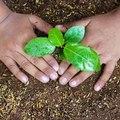 Tanácsok növények beszerzéséhez