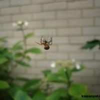 Hasznos állatok a kertben - A pók