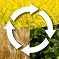 Hagyományos paraszti gazdálkodás: vetésforgó