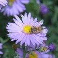 A dolgozó méhek élete
