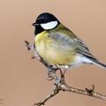 Februári madárkörkép