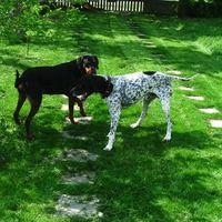 Kutya a kertben