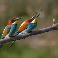Színpompás madaraink