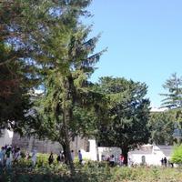 Isztambuli parkmustra