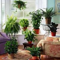 Lámpát a növényeknek!