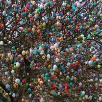 Fán terem a hímes tojás