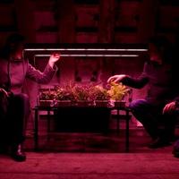 Zöldséges kert a föld alatt – ez lesz a jövő?
