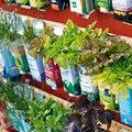 Kreatív újrahasznosítás - kertek dobozban, palackban