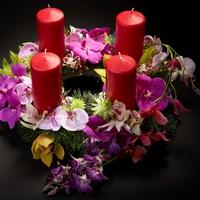 Advent orchideákkal - Nyerj páros belépőt!
