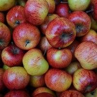 Cseppé zsugorított alma