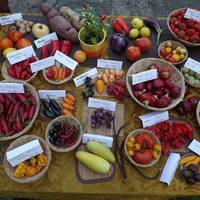 Különleges zöldségek a Füvészkertben