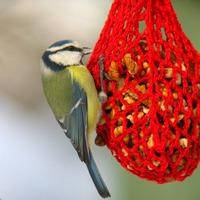 Érdekességek madarainkról: A