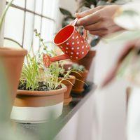 Szobanövények öntözése és a vízminőség