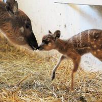 Antilopbébit hozott a gólya Nyíregyházára