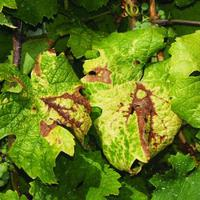 Kártevőturizmus: újfajta kukacok a cseresznyében
