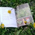 Legendás gyomnövények és megfigyelésük...