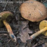 Erdei gombák