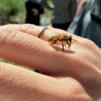Bajban vannak-e a méhek Magyarországon?
