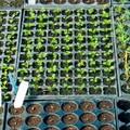 Tavaszközeli kertésztippek