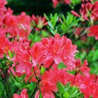 A jövő virágaiért most kell trágyázni
