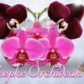 Lepkeorchideák lepik el a Vajdahunyadvárat