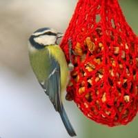 A madáretetők első látogatói: a cinegék