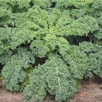 Áprilisi vetnivalók: leveles és bimbós kel