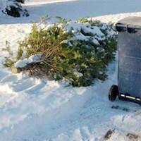 Vízkereszt, avagy a karácsonyfa vége