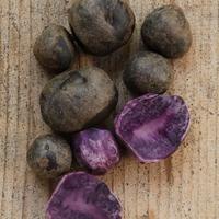 Svéd kék krumpli, ami lila