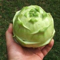 Zöldségtrófeák - fajtaajánló