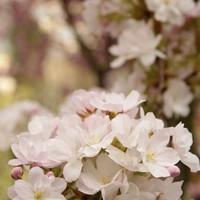 Virágpompás hétvége