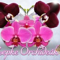 Orchidea Kiállítás – Megvannak a nyertesek!