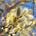 Virágvasárnapitt a tavasz!