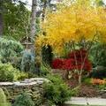 Növényültetés ősszel