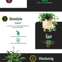 Altató növények a hálószobában