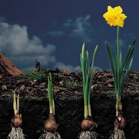 Virághagymák: készüljünk a tavaszi ültetésre!