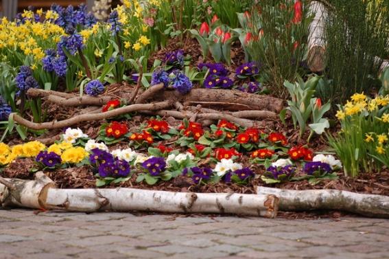 Blumenbeet Marktplatz - Copyright Anna Marten.JPG.65749.JPG