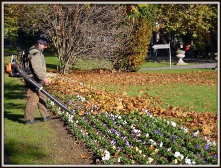 003  Harcban az őszi levelekkel.JPG