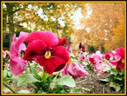 004  Az ágyasokakban nem spórolnak a virágokkal.JPG